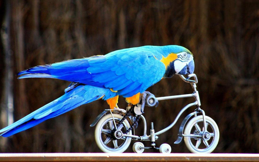 Ездите на велосипеде